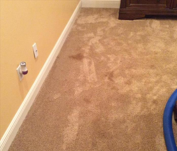 Pet Stains in Deltona, FL Before